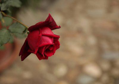 Vins Rouge Perroy